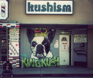 Kushism Collective Van Nuys California